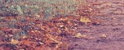 Fall In Love - 다가오는 가을, 들으면 좋을 감성 가득한 음악