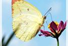 적묘님의 블로그 이미지