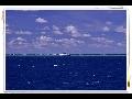 그레이트 베리어 리프 리브어보드(The Great Barrier Reef)..산호의 원류