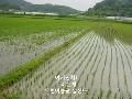 이야기로 들어보는 쌀아지매 ~ ^^
