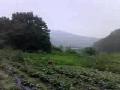6월의농장주변모습