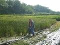 쌀아지매 농가