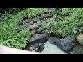 [동영상] 부천식물원의 '수생식물관' 풍경  (20200215)