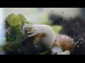 난생 처음 보는 달팽이 식사 시간