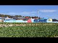 [금호마을벽화] 도덕면 용동리 금호마을 벽화그리기7-마을전경벽화영상