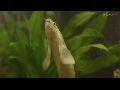 1년 동안 걷기 훈련 시킨 물고기