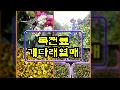 """(7월달/충영엑기스) 뼈 건강에 도움되는 """"충영엑기스"""" 만들기"""
