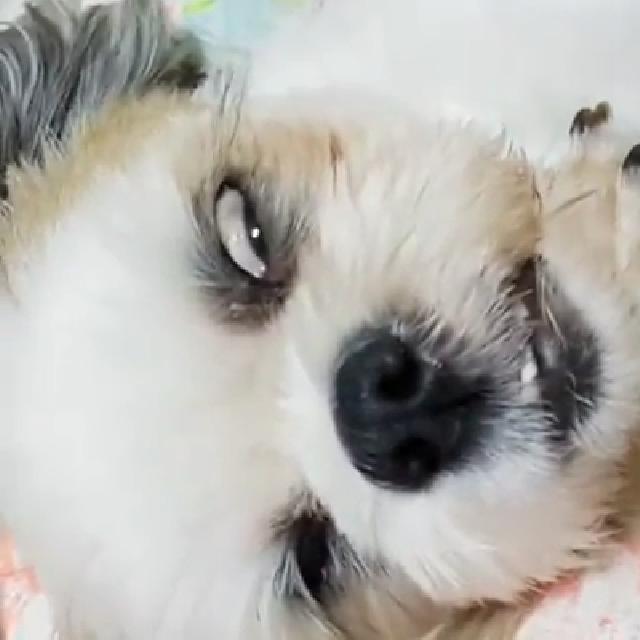 자면서 호러물 찍는 강아지