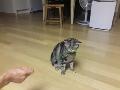 풀먹는 울냥이 (인코딩 완료!!!)