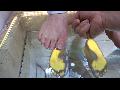 족저검사 동영상