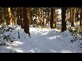한라산 삼나무숲