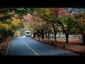 2019 내장산 단풍, 전라도여행, 한국여행, 우리나라여행, 한국관광, 국내여행, 한국투어, 대한민국여행, 大韩民国旅行, Korea Tour TV