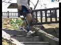 [무릎: 대퇴,슬관절] : 마우크 니(MAUCH KNEE)