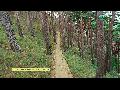 자연과 사람이 함께 만든 명품숲, 대관령소나무숲