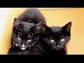 """여림이네 """"검은고양이 네로와 메롱이 자매"""" 야옹이들"""