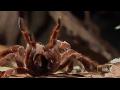세상에서 가장 큰 독거미 후덜덜