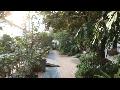 [동영상] 종로 '창경궁 대온실의 봄' 풍경 8  (20200208)