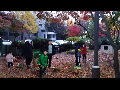 우리동네 낙엽은 우리들이 책임진다... 솔선수범 낙엽쓰는 자랑스런 어린이들