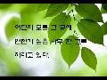 연습용 동영상(나무)