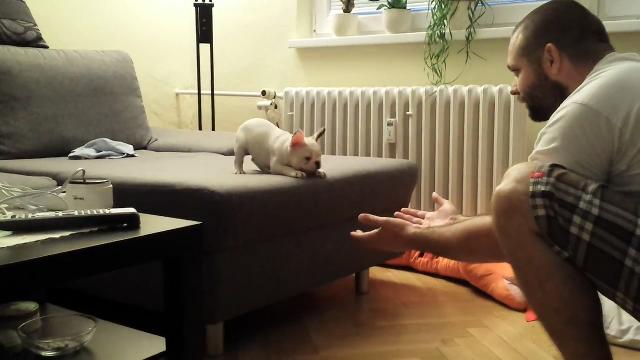 아기 강아지의 첫 점프 실력은?