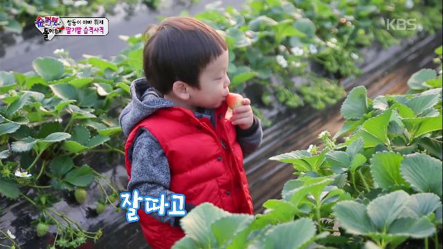 딸기밭, 무아지경 딸기먹방