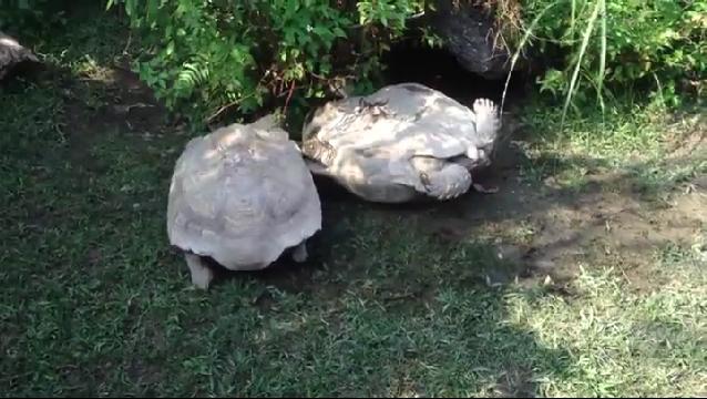 모두가 환호성 지른 거북이의 우정