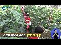 봉황52 체험 뉴스~~