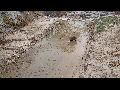 도봉산 야생 멧돼지 동영상