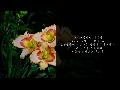 """지난 """"교회정원숲"""" 워크숍(10/19) 때 보았던 짤막한 영상과 자료입니다."""