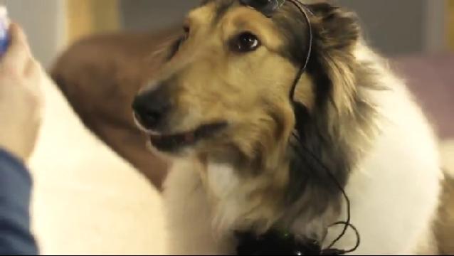 개가 말을 할 수 있게 된다면?