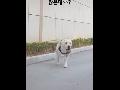 """사람 못된건 """"개""""만도 못하다...개가 주는 한 편의 감동 스토리"""