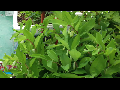 미니 옥상 농원[채소 및 산약초01]