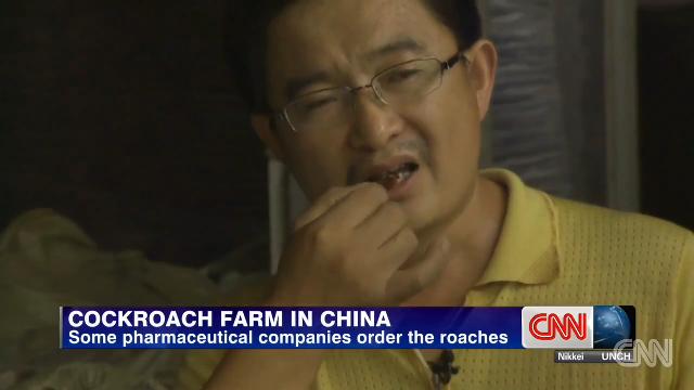 중국의 바퀴벌레 농장