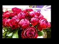 고양국제꽃박람회(2)