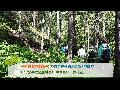 <산림청 100대 명산> 대암산 용늪으로 야생화 여행을 떠나보아요!