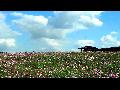 드림파크 야생화숲으로의 초대...한들한들 코스모스 꽃길을 걸었네