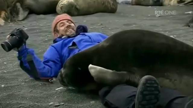 바다표범 애교, 너 좀 낯설다