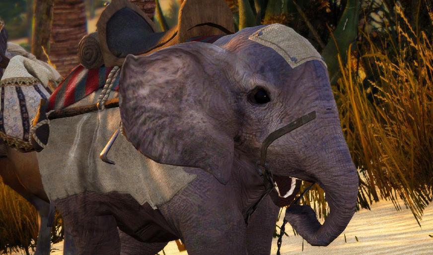 신규 탈컷, 달구 코끼리 등장!