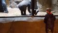 소년과 교감하는 아기 고릴라