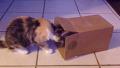항상 한결같은 우리집 고양이