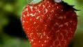 볼수록 신기한 딸기 성장 과정