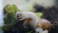 난생 처음 보는 달팽이의 식사