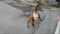 비눗방울에 열광하는 강아지
