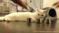 끝내주는 고양이의 눈썰미
