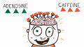 카페인이 뇌에 미치는 영향