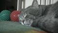옹알이 소리를 내는 고양이