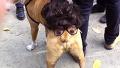 실소 터지는 강아지 코스프레