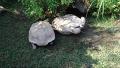 모두가 환호성 지른 거북이