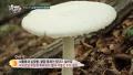 독버섯과 식용 버섯 구분하는 법