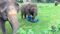 리본 갖고 노는 귀여운 코끼리